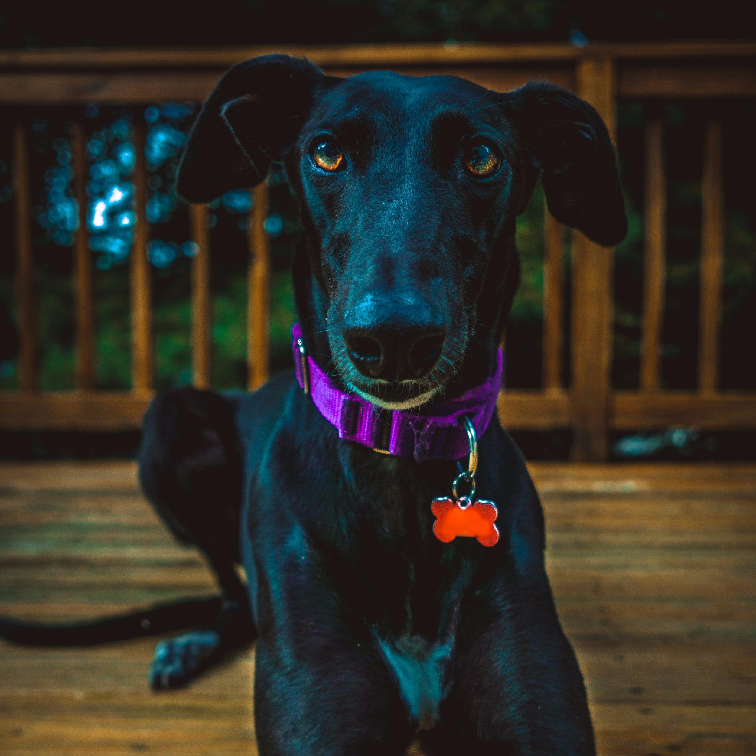 Homeward Bound Animal Care LLC  Lakes Region New Hampshire  Dog Walker  Lost Dog Prevention April 23, 2019