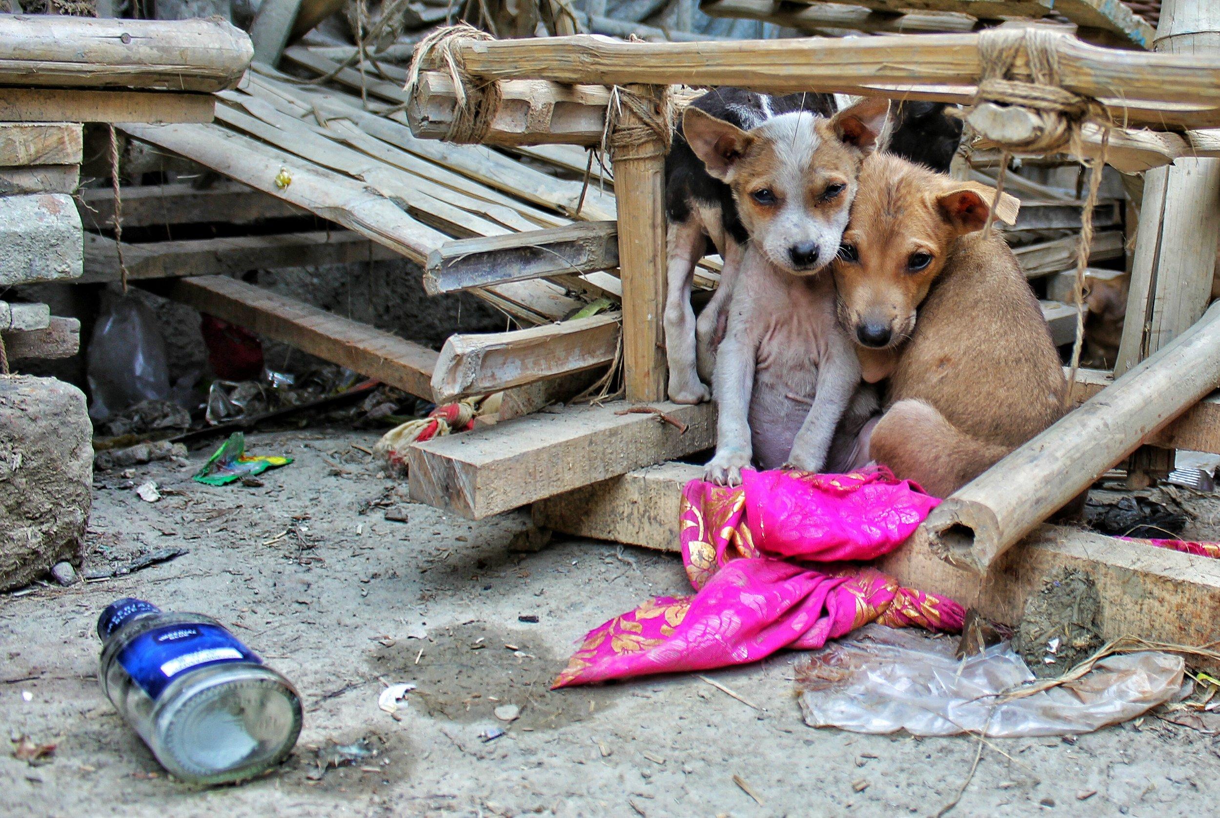 Homeward Bound Animal Care, LLC  Adopt a shelter animal  Local adoption  Adopt a shelter pet day