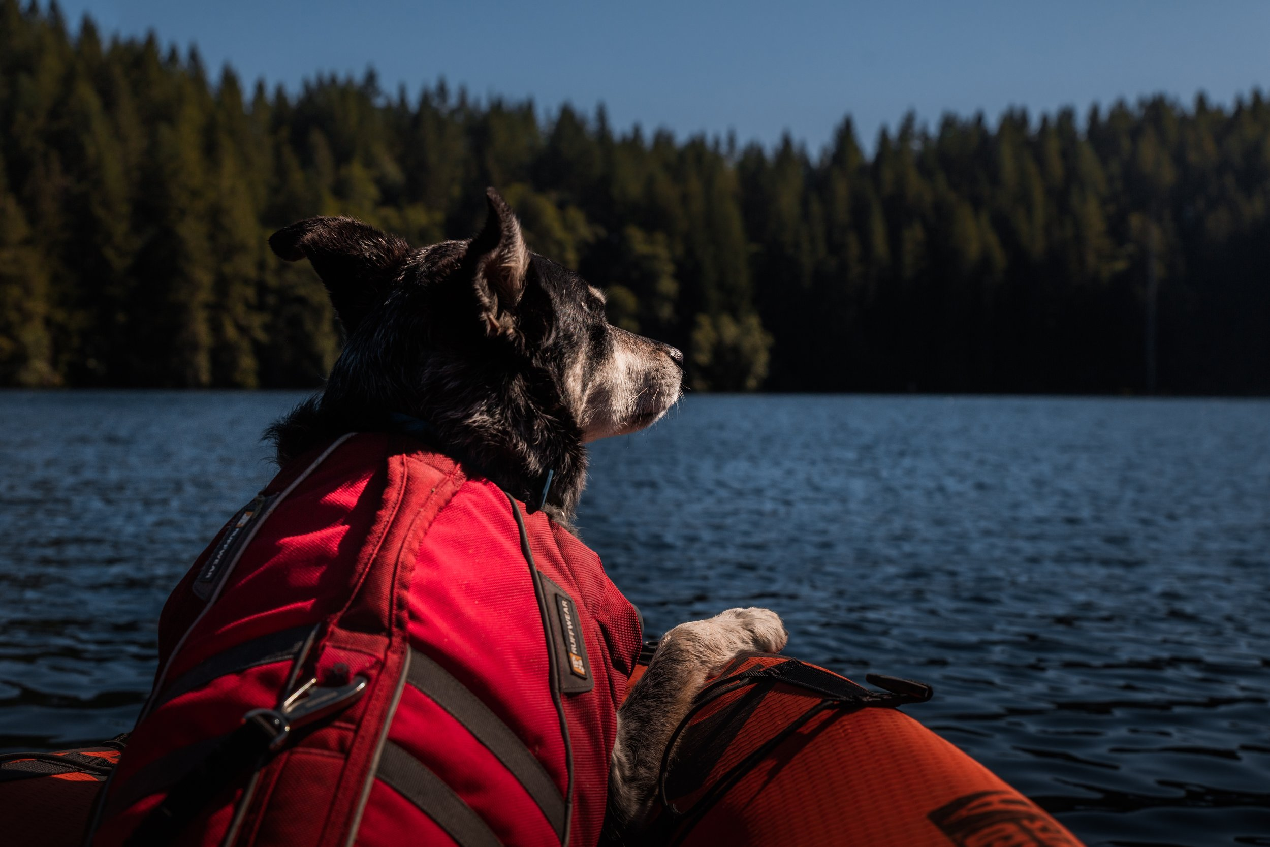 Homeward Bound Animal Care  Lakes Region NH  Boating with your dog safety tips  Ice out New Hampshire  Dog life jacket
