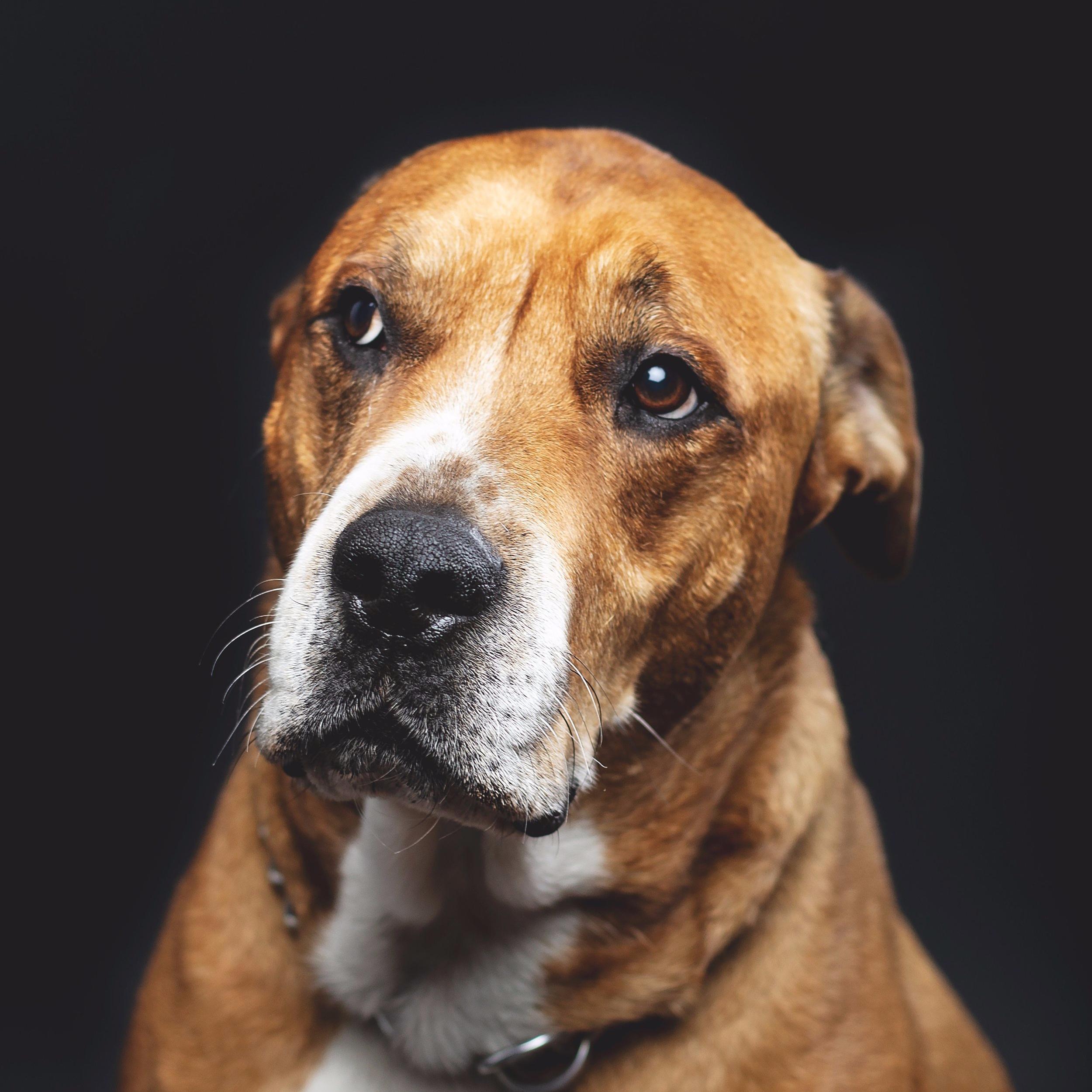 Homeward Bound Animal Care LLC  New Hampshire  Calming Signals Turid Rugaas  Communicate with your dog  Dog behavior  Dog Body language