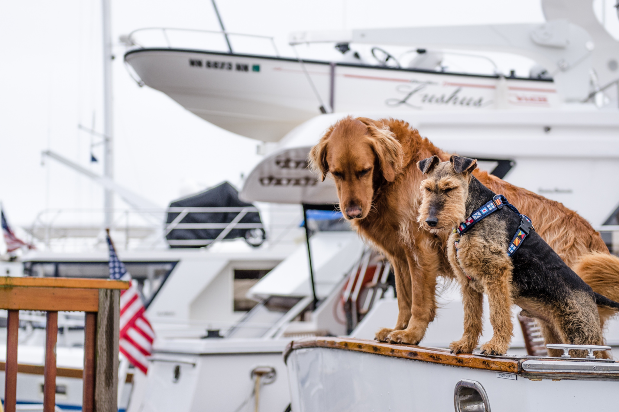 Top 4 Places Near Lake Winnipesaukee to Visit with Your Dog by Boat