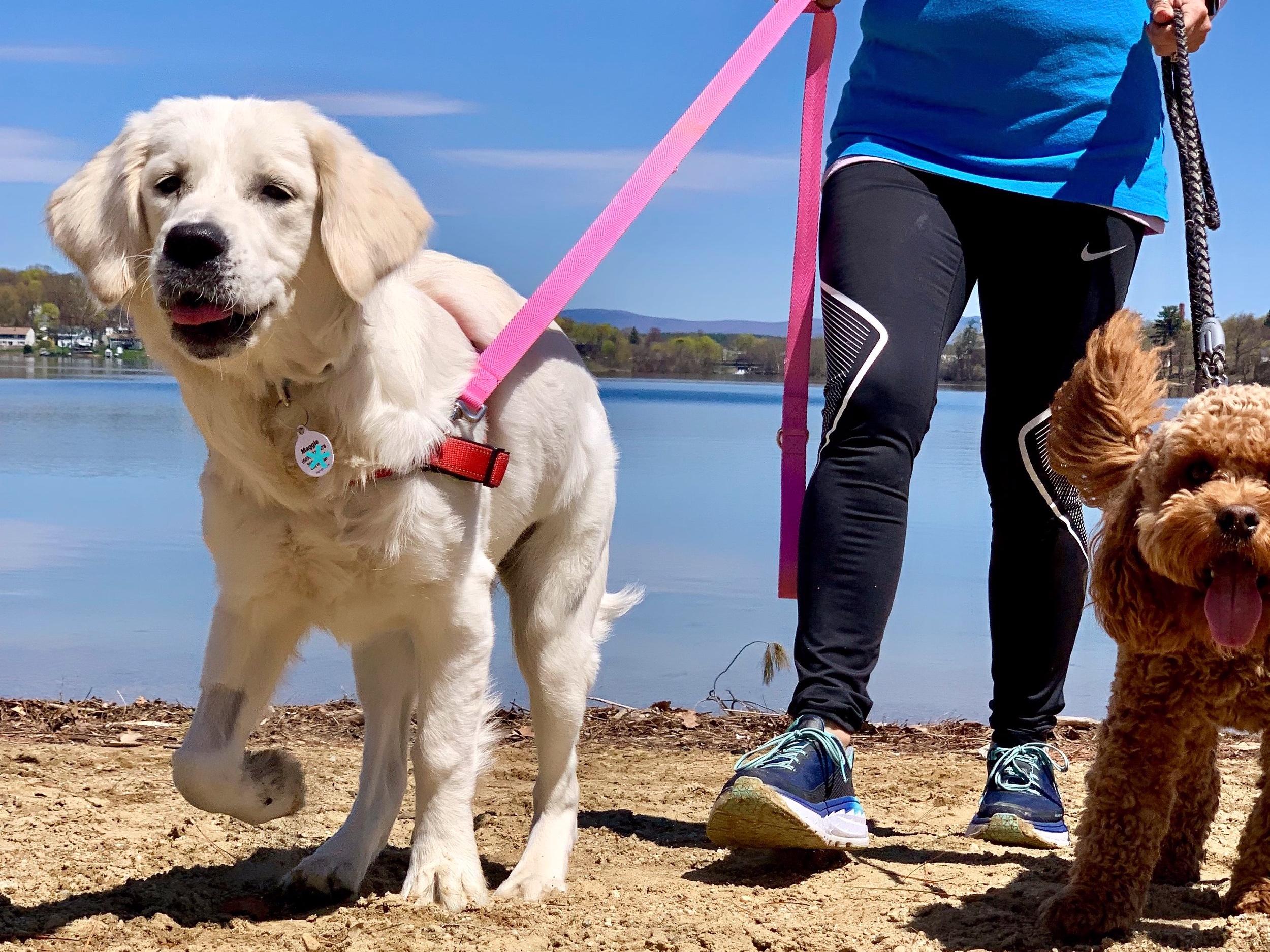 You Need a Homeward Bound Dog Walker