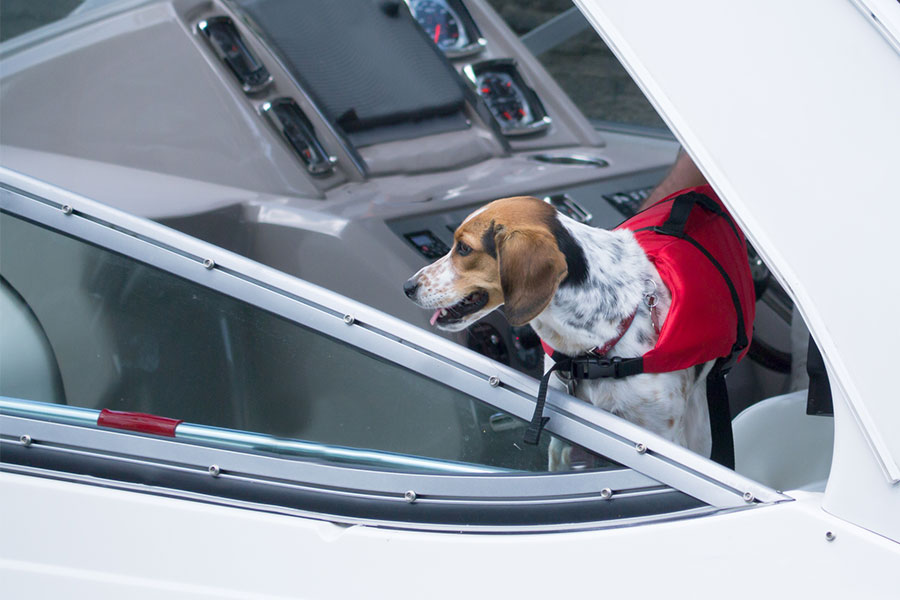 Dog Friendly Restaurants Accessible by Boat in the Lakes Region NH