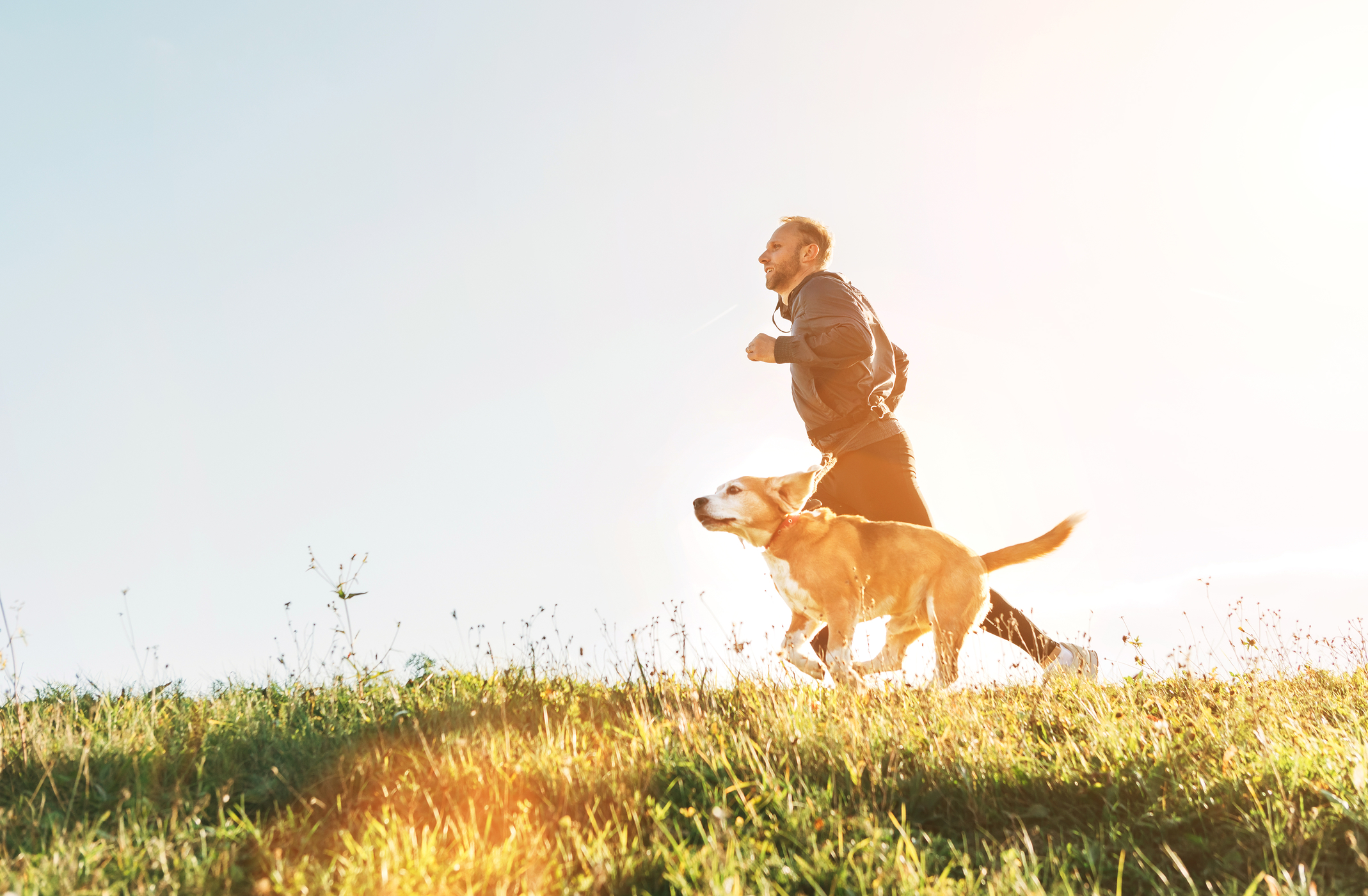 Homeward Bound Dog Walking  Why Your Dog Needs Exercise