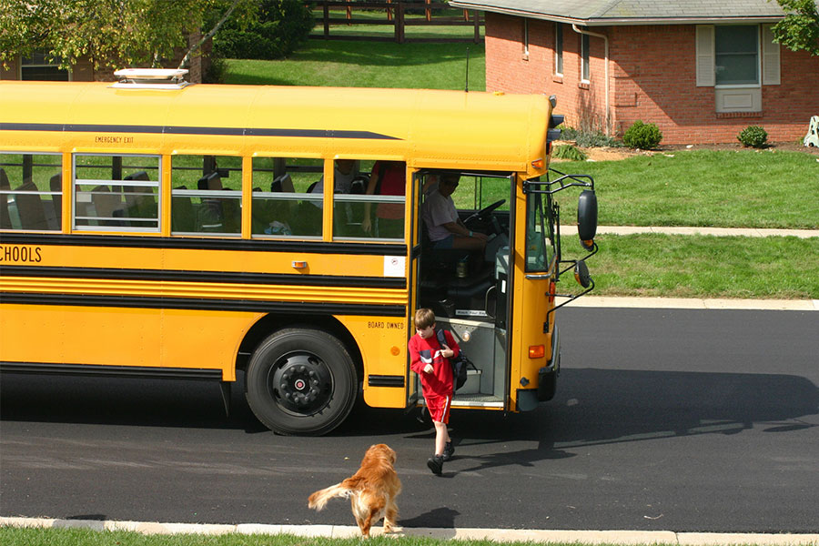 Getting Your Dog Ready For Back to School