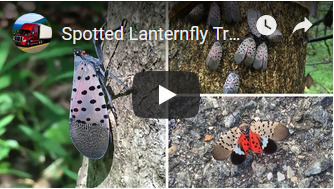 lanternfly_training_video.jpg