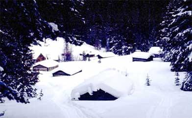 Garnet in the winter