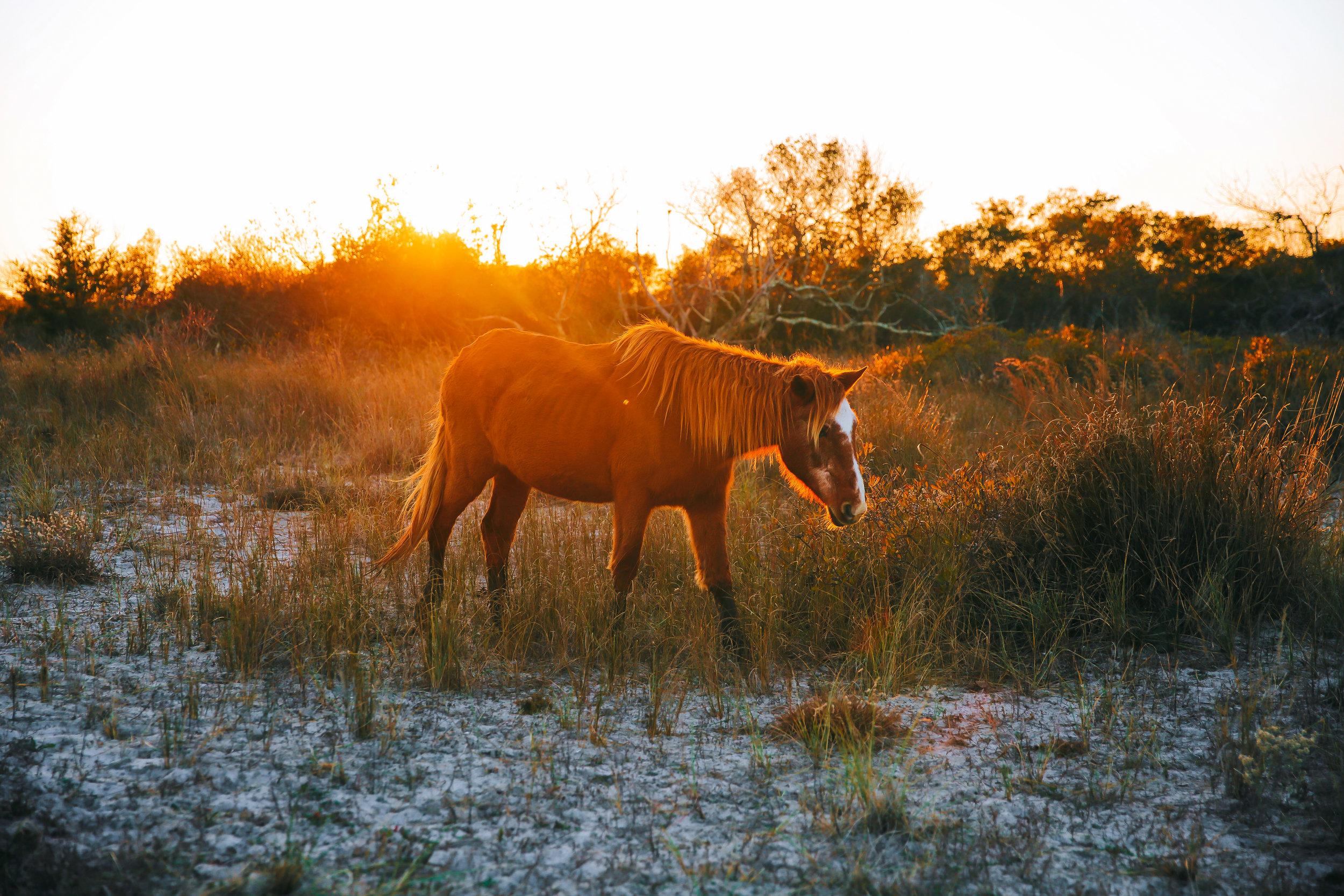 Assateague State Park, Horses, November 2017-4.jpg
