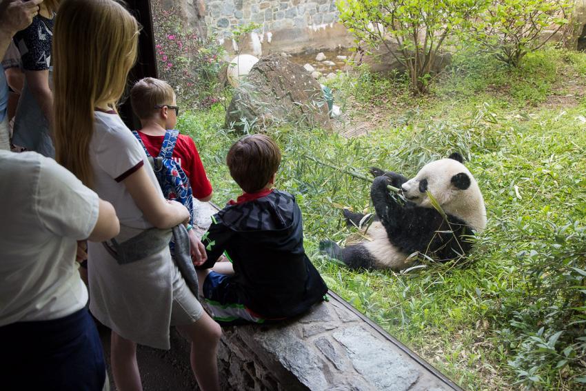 Giant Panda habitat design