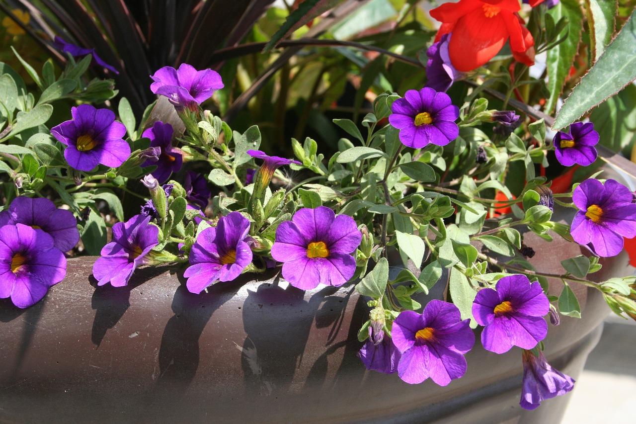 flower-1714849_1280.jpg