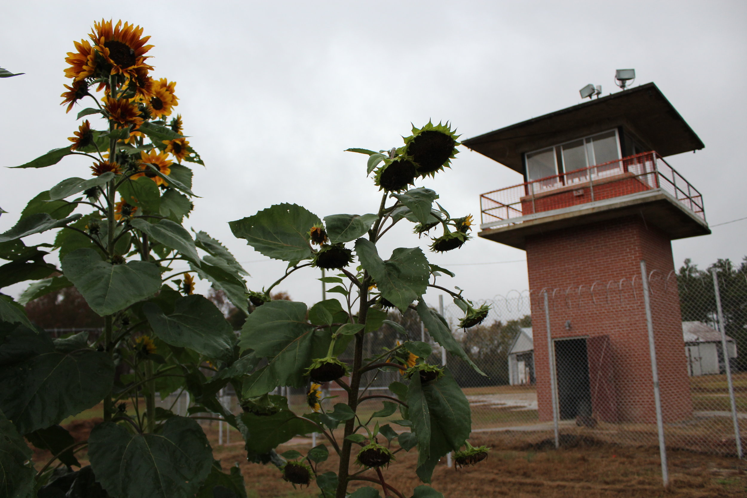 Homes and Gardens: The best thing to ever happen to a prison    (Scalawag Magazine, 2018)