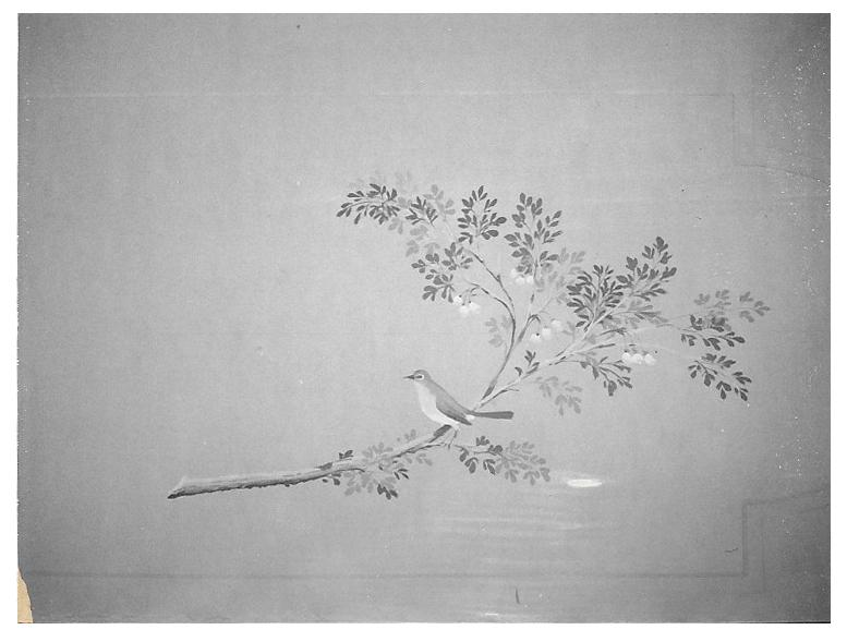 Bird on limb.jpg
