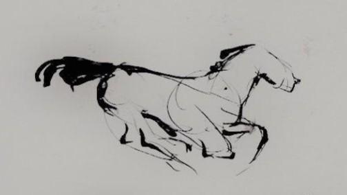 jonathan horses napa  (2).jpg