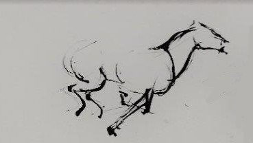 jonathan horses napa  (3).jpg