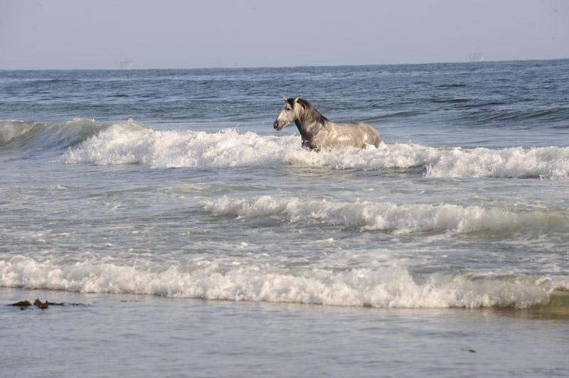 Sea Horse Rises   Digital Photograph, 2017, Animal Series