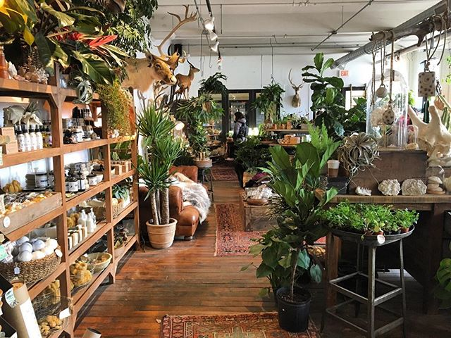 Now if only my apartment could look like this 👀 🌿