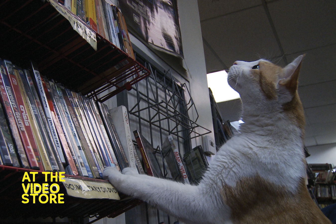 STill Aimges At the Video Store Website4.png