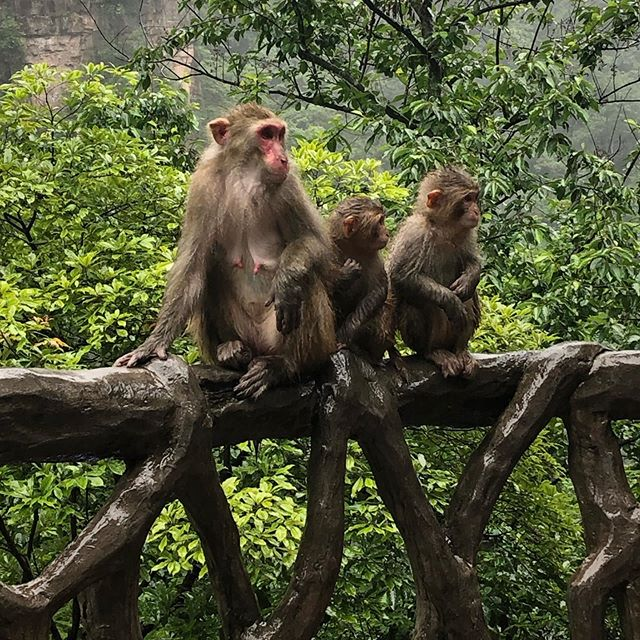 """Just a couple of monkeys 🐒🤪 // """"Everyone is obliged to cherish the grass"""""""