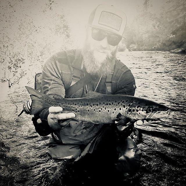Salmo Salar!  #alpolandart #maine #landlocked #salmon #atlanticsalmon #fallfishing #flyfishing #streamereater #streamerjunkie #flyfishingnation #fall #fun