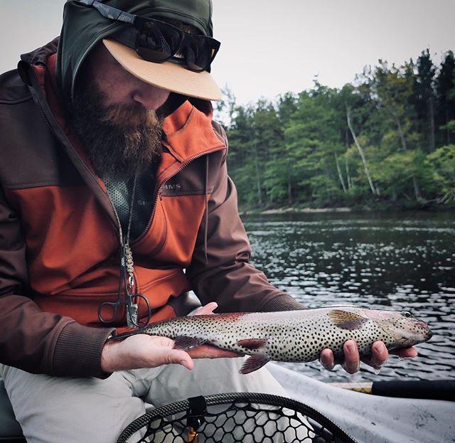 Leopard trout! #alpolandart #trout #rainbowtrout #bow #leopardtrout #flyfishing #fishing #maine #summer #simms #hydedriftboats #bigriver #river #streamereater #streamerjunkie #smithoptics #fishpondusa #tforods #nautilusreels
