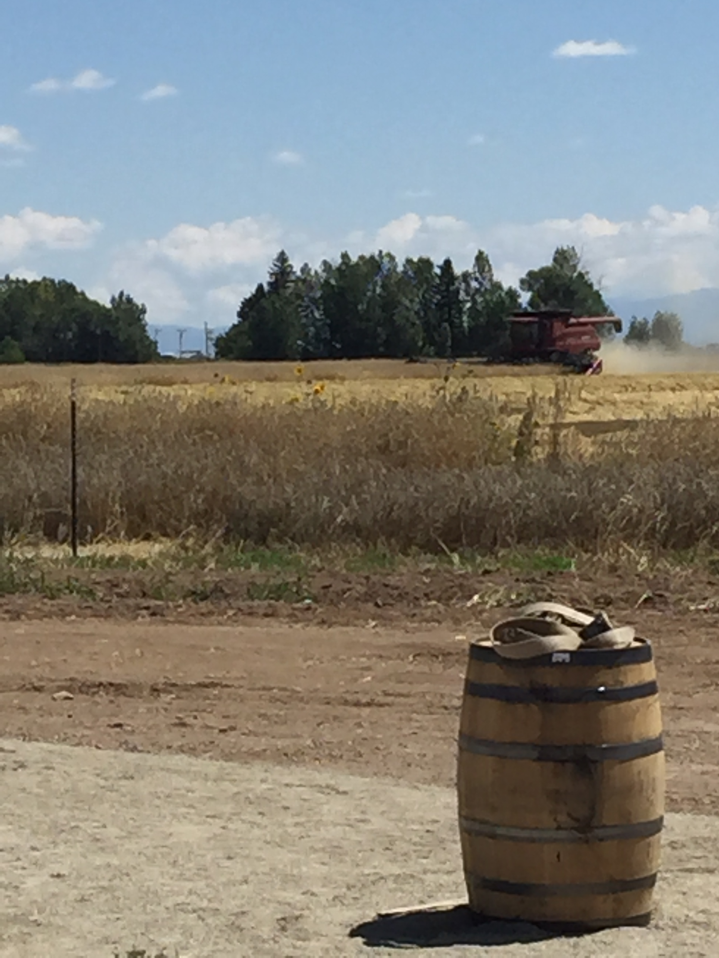 Harvesting the field at The Colorado Farm Brewery