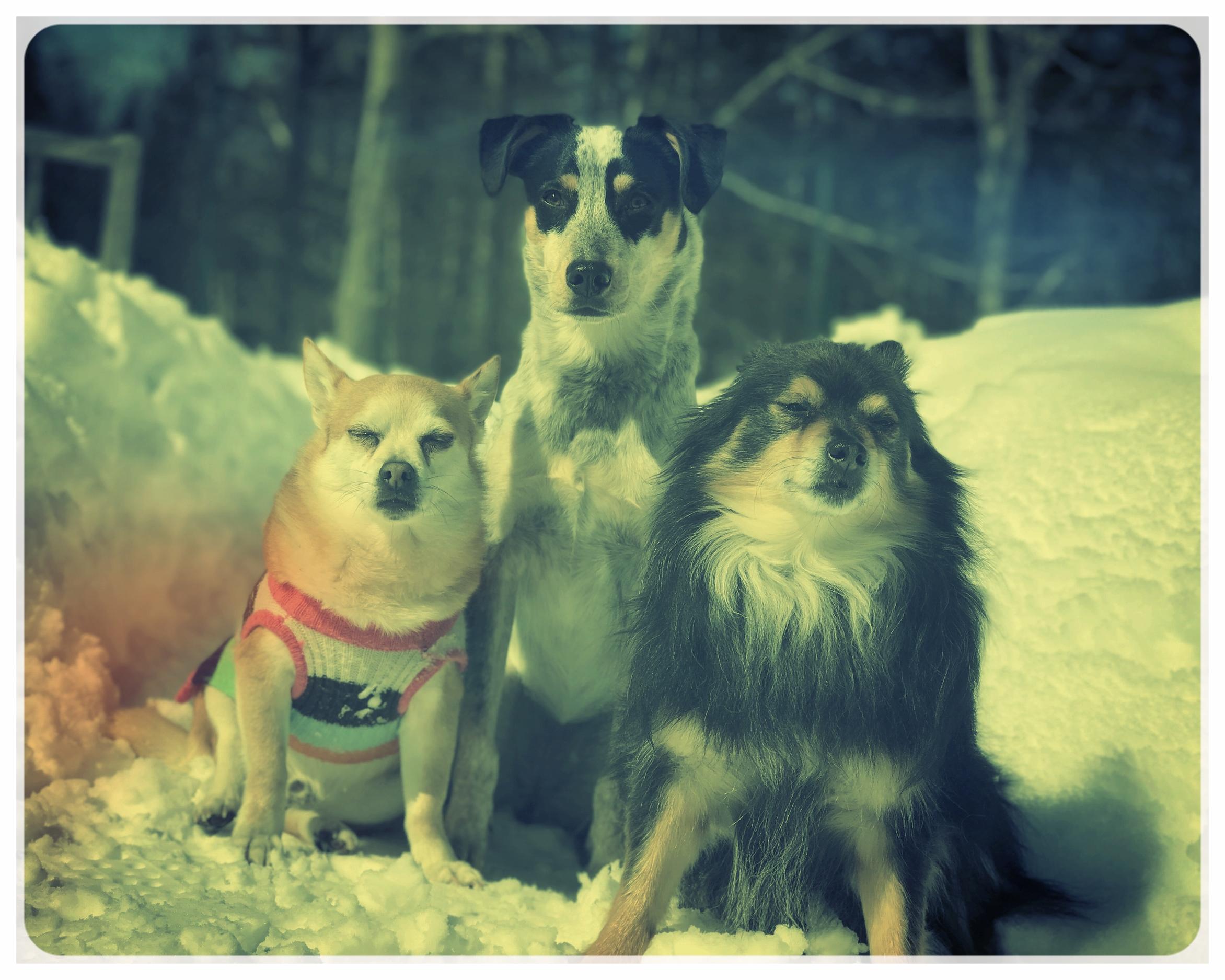 PINTO, TULAH & TONY