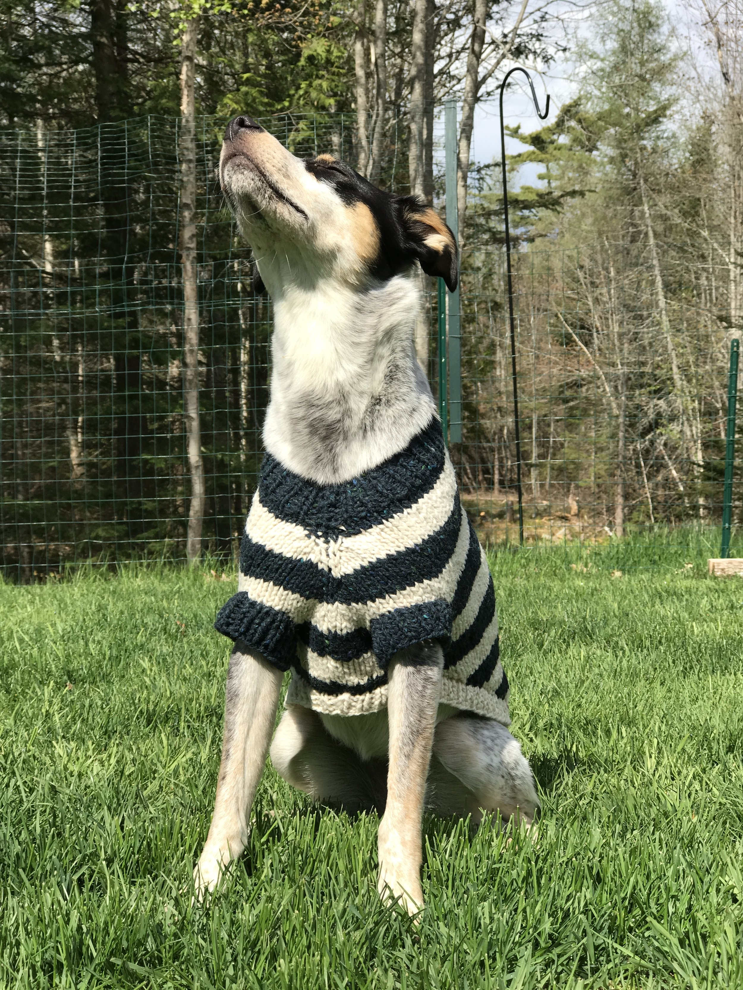miss Tulah - wearing an original knit by Kathe Patterson