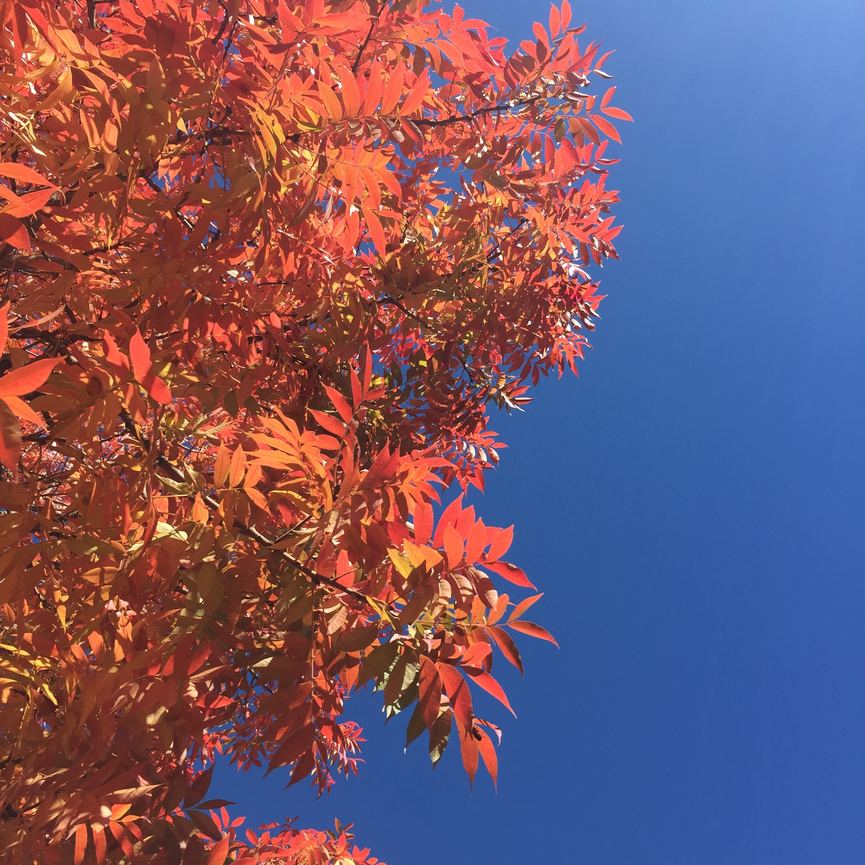 Fall-Tree leaves.jpg