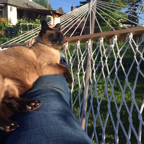 Summer-Hammock with Gracie.jpg