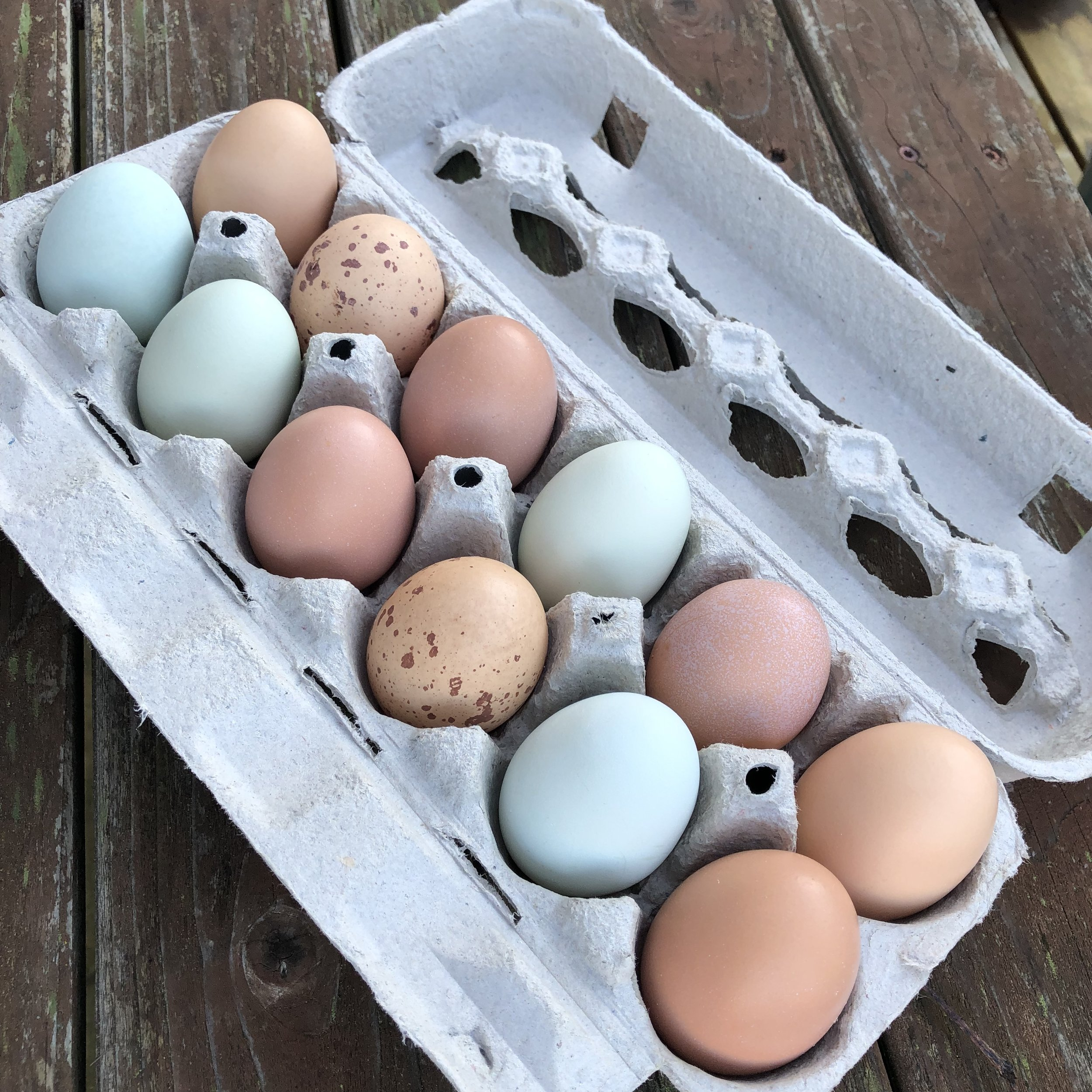 A carton of fresh eggs that are brown, tan with brown spots, and blue.