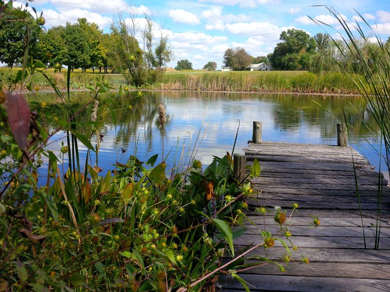 The-Pond.jpg