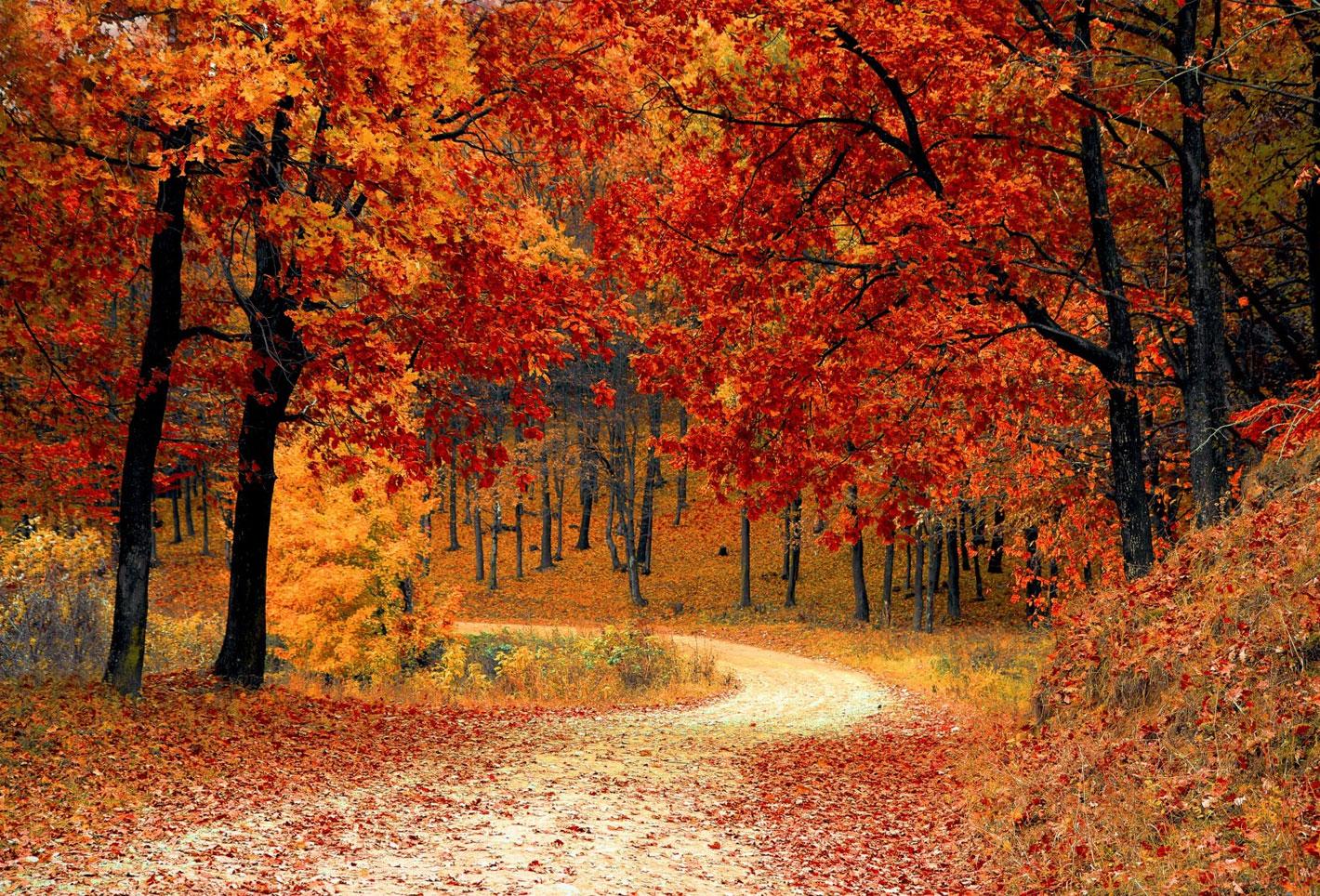 AutumnFarm.jpg
