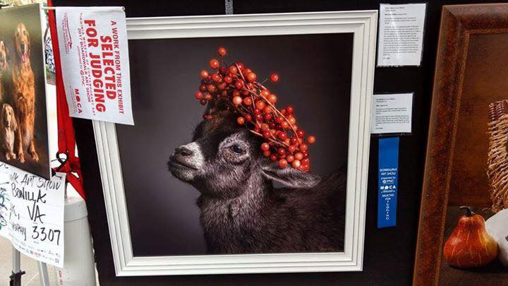 """""""Pietist Mia"""" is a baby pigme goat who was crowned with berries. This portrait was selected for judging at the prestigious Boardwalk Art Show in VA Beach, 2017"""