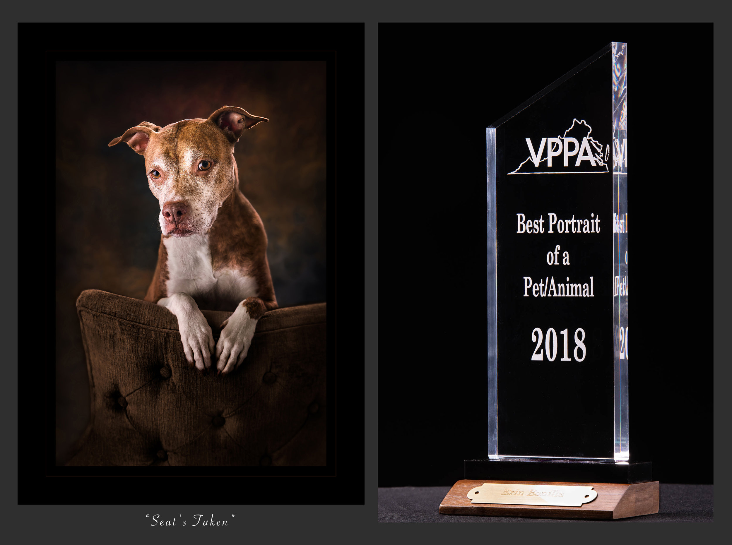 Virginia Professional Photographers Association2018Best Portrait of aPet/Animal -