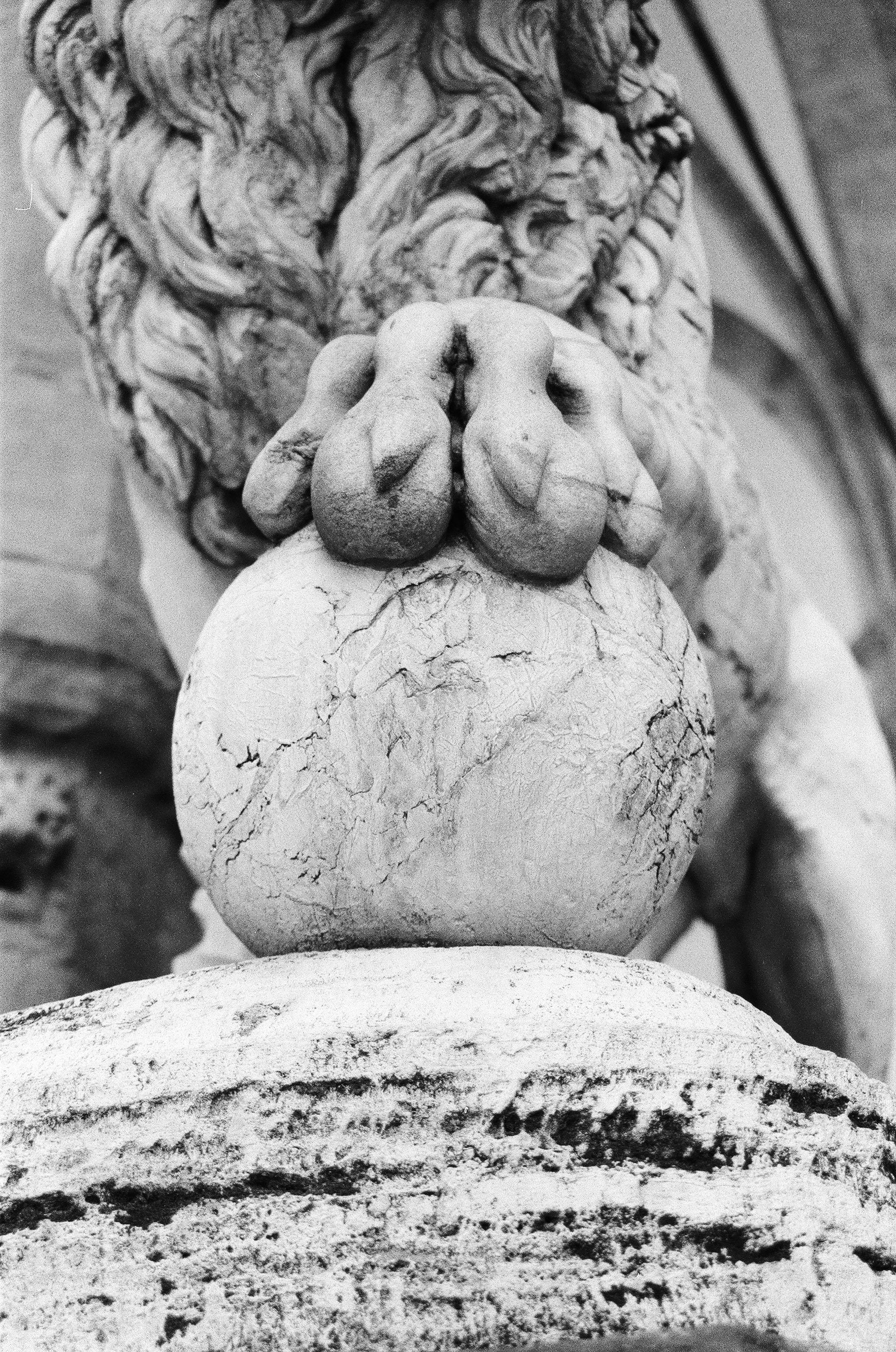 lion firenze.jpg