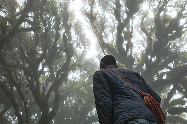 It was like walking through the forbidden forest. Minus the massive spiders, thank fully. . . . . . . . #adventurethatislife#optoutside #keepitwild#nakedplanet#natgeotravel #natgeoyourshot#bbctravel#earthfocus #lensbible#theoutbound#africa#tanzania #awesome_earthpix#welivetoexplore #discoverearth#earthofficial #getoutstayout#fantastic_earth #modernoutdoorsman#adventure-culture #amazingphotohunter#splendid_xposure #igbest_shotz#stayandwander #epic_captures #gottolove_this#insta_crew#splendid_earth #exclusive_shots #speechlessplaces