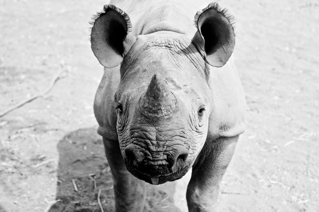 Join the fight to save our rhinos