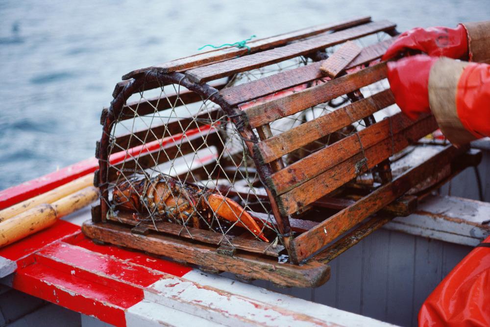 Hummerfiske download.jpg