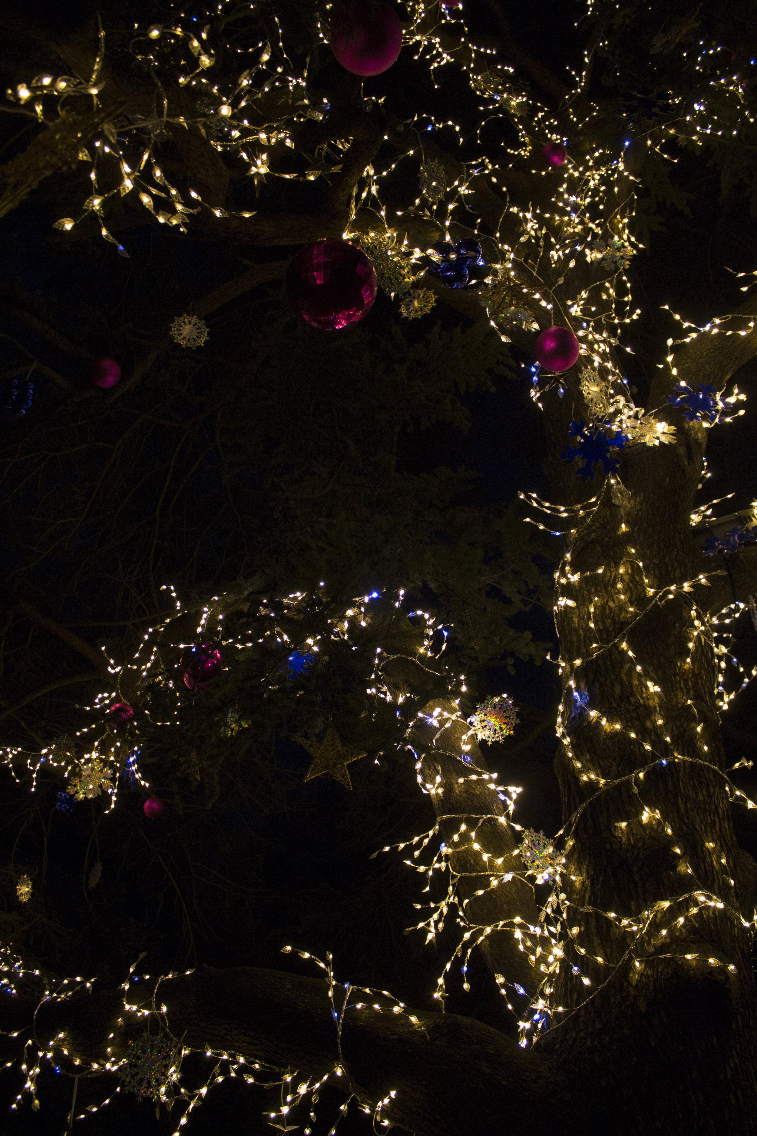 tree16.jpg