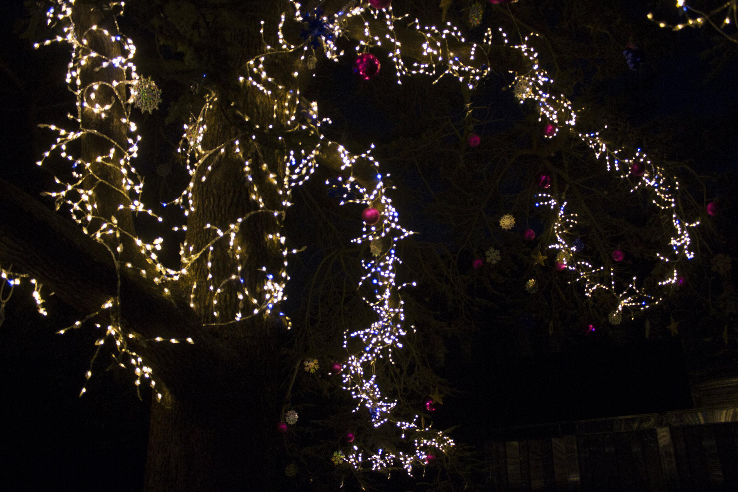 tree18.jpg