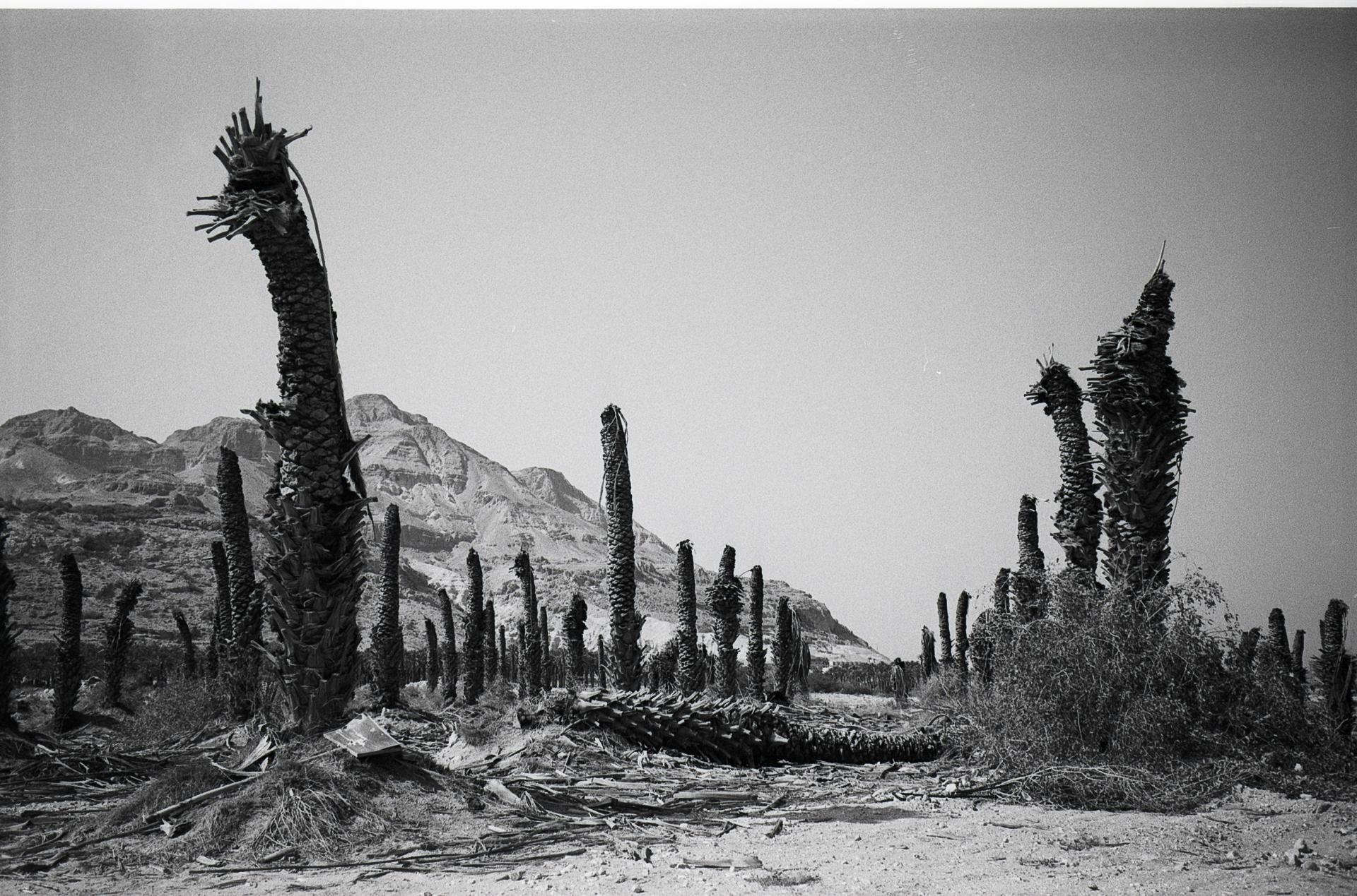 Dead Palms, 2019
