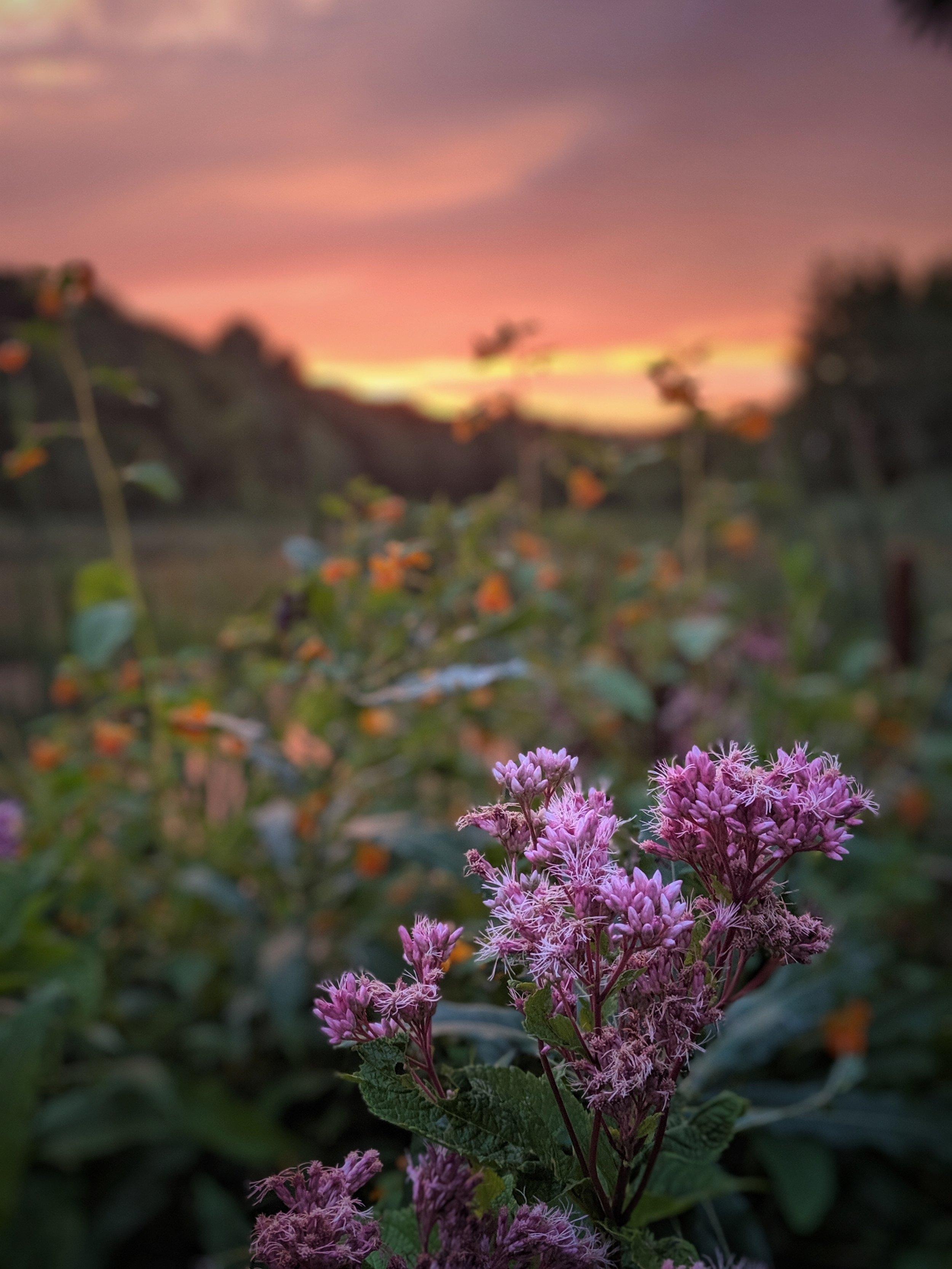 Easton Mountain at sunset. (Photo by Adam Nicholson)