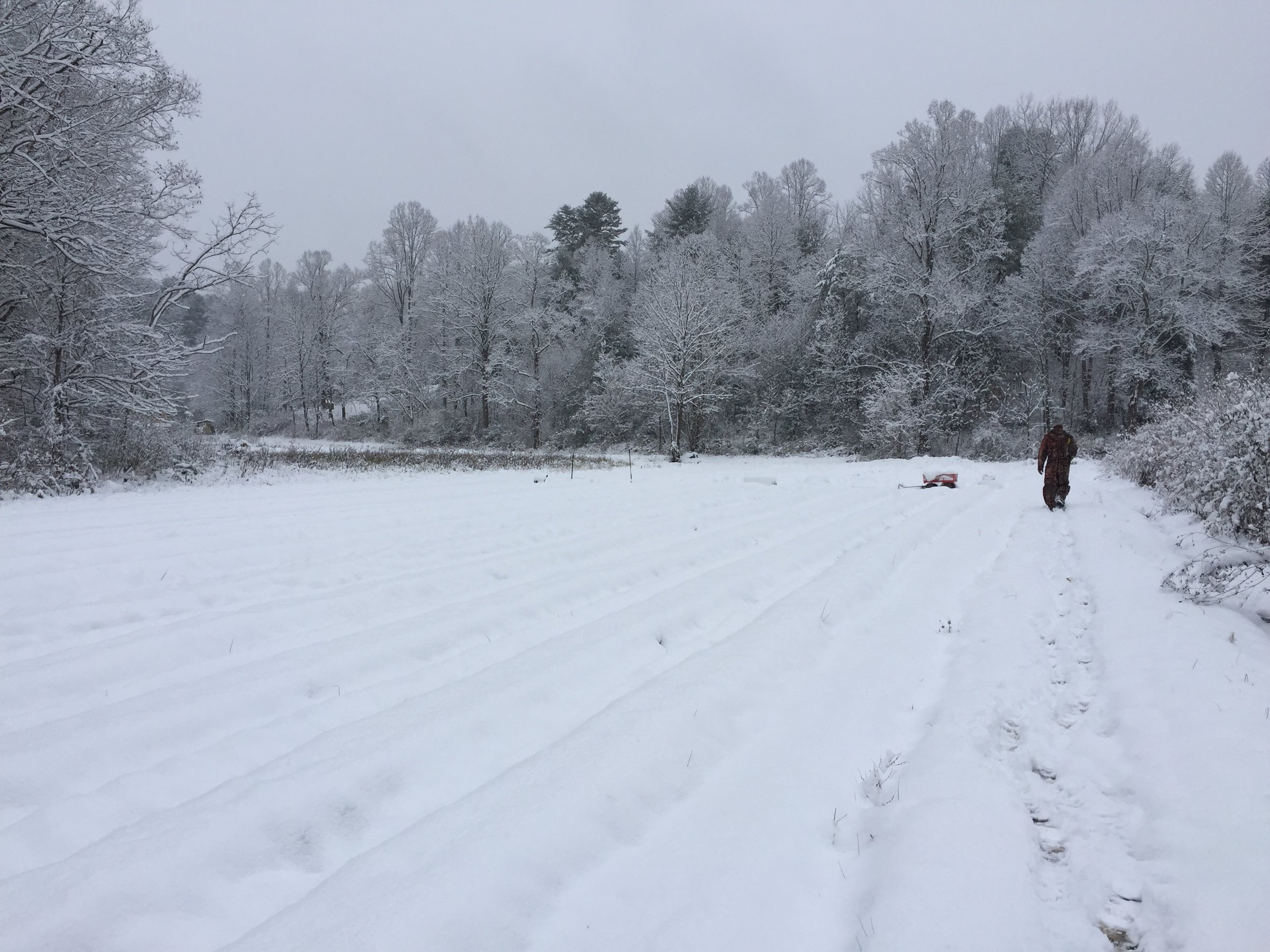 This picture is of fields of flowers. Covered in snow.