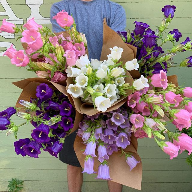 Do you want to be the life of the party? We can help you! With a special flower sale we're calling THE DEAL OF THE CENTURY, we're making it very easy to show up with an armload of flowers for all your Memorial Day celebrations this weekend! Pick up your flowers at @ashevillecitymarket on Saturday from 8 am until noon. Free parking, as always, at Hometrust Bank. - Oh you want more details on THE DEAL OF THE CENTURY? Most straight bunches will be priced as follows: One for $7, two for $12, three for $15, four for $20, five for $25, six for $30, etc. AND JUST WHEN YOU THOUGHT THE DEAL COULDN'T BE ANY BETTER — 10 bunches for $45. That's insanity. Thank you, mild winter, for the incredible abundance that's coming out of our fields. - Sorry, THE DEAL OF THE CENTURY doesn't apply to ranunculus, most of which will be tucked into mixed bouquets. - Also, mixed bouquets will be priced as usual, but they're huge this week. Really gigantic. You've got to see it to believe it! - I really wish I had a squiggly ribbon man to help convince you of these deals, but you'll just have to settle for a bit of ALL CAPS and the salesy language above. Seriously, come out and help us crush it. - A million thanks to @brennan_bryce who we ambushed on Main Street and coerced into modeling. And this campanula is really exceptional. Absolutely part of THE DEAL OF THE CENTURY.