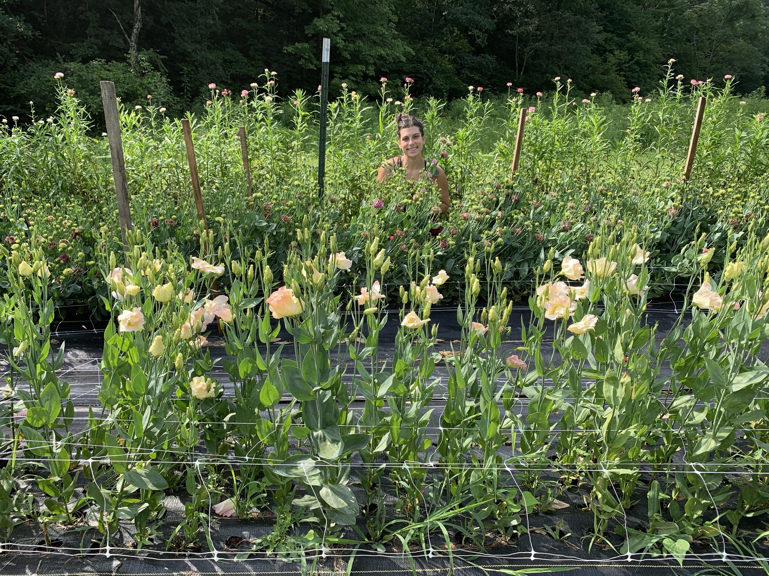 Asheville Flower Farm Lisianthus Patch