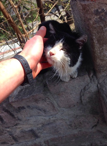 Friendly cat: Tbilisi, Georgia