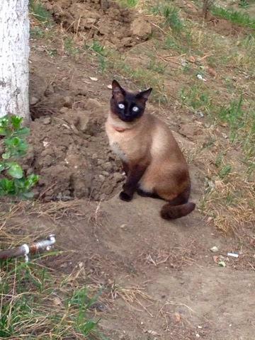 Shy cat: Tbilisi, Georgia