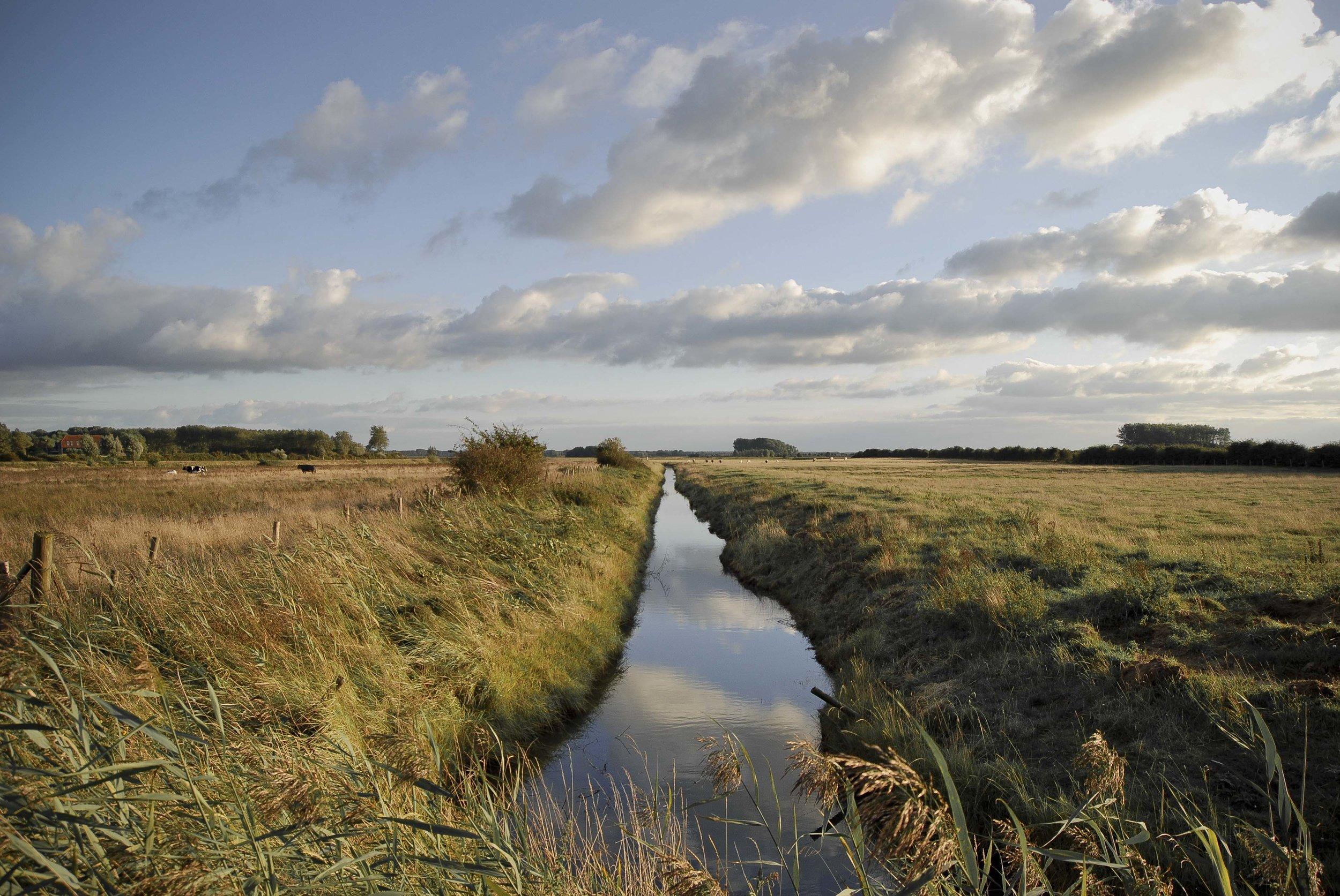 Stream in cow field