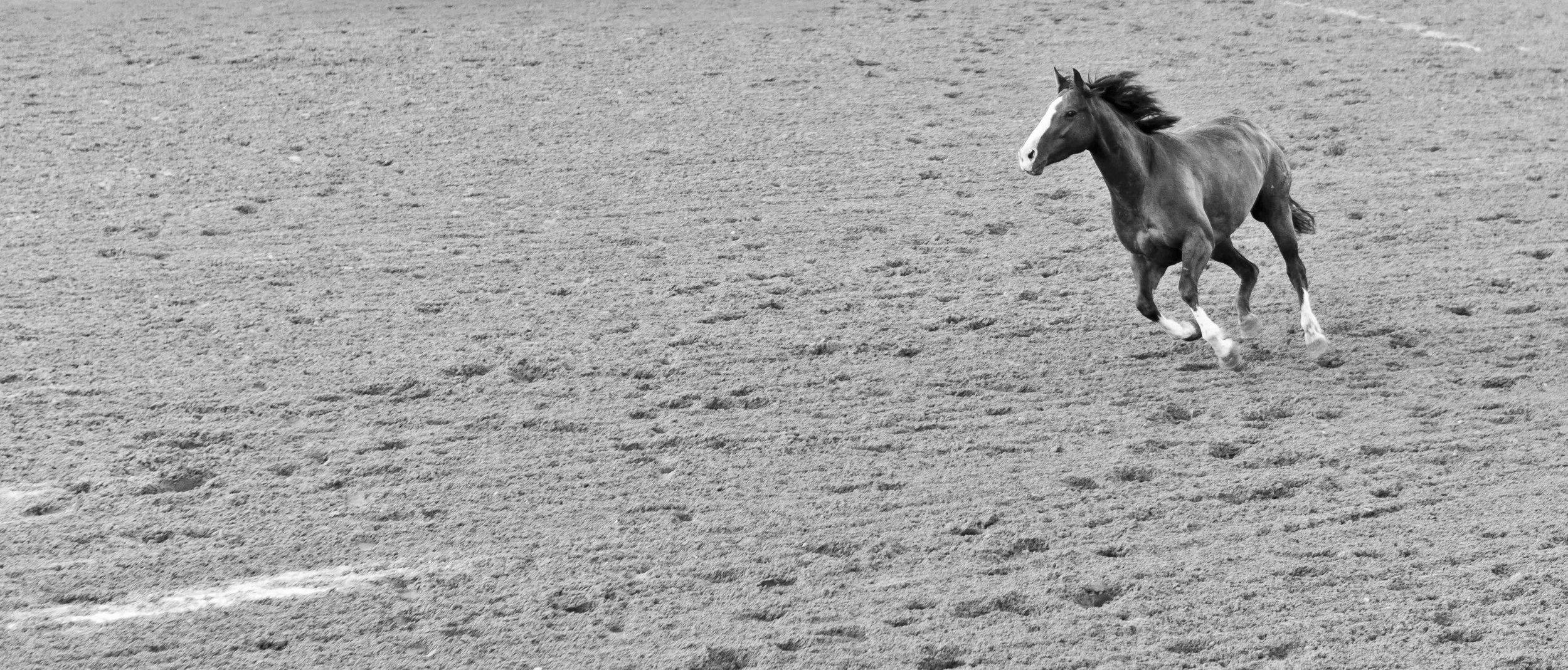 Pony loose