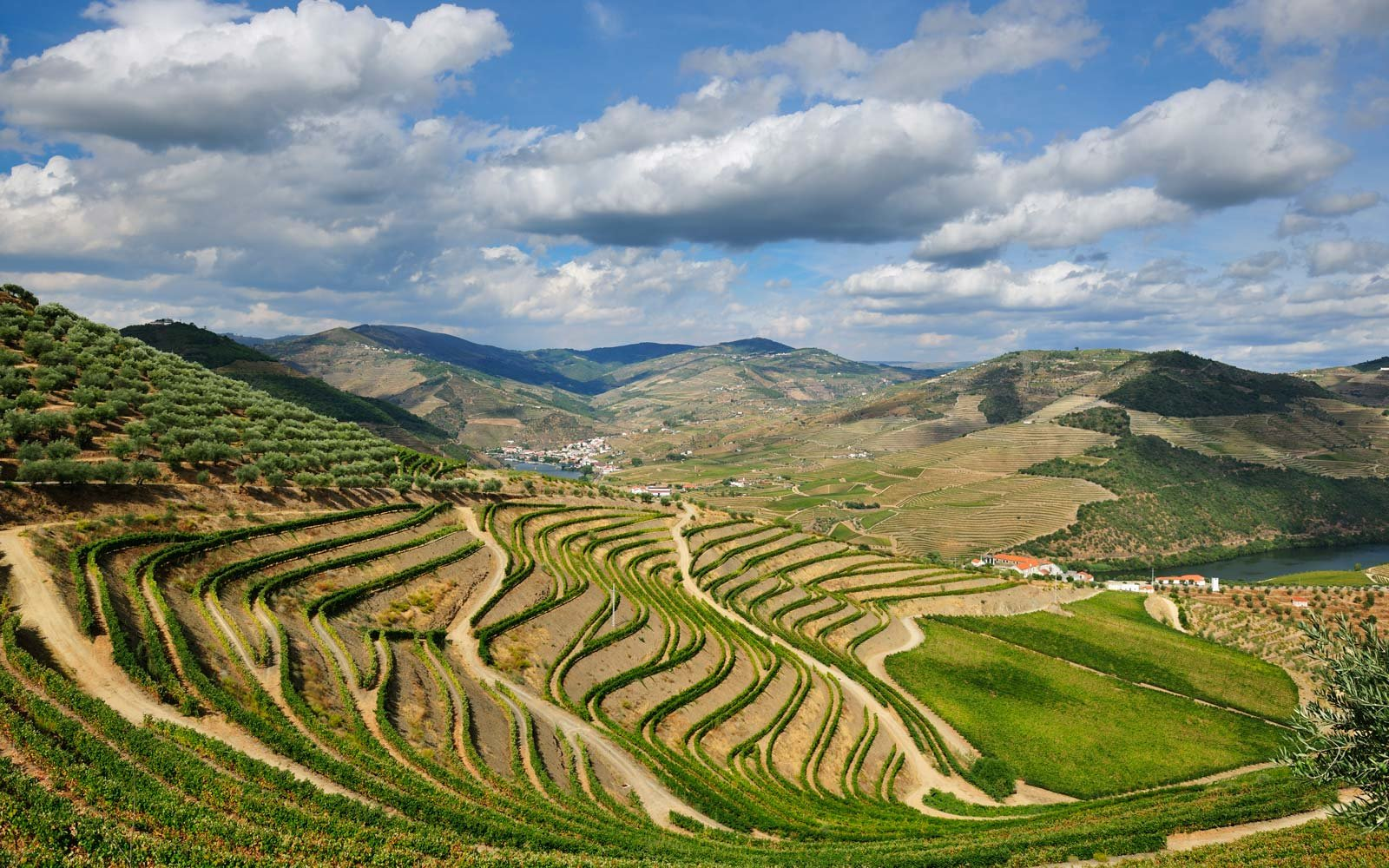 douro-valley-vineyard-PORTUGALWINE1116.jpg
